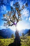 Montagne di Karwendel Immagini Stock Libere da Diritti