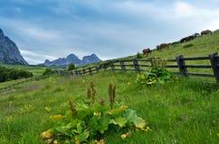 Montagne di Komovi Fotografia Stock