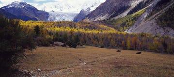 Montagne di legno e della neve del prato Immagini Stock Libere da Diritti