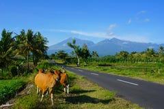 Montagne di Lombok Fotografia Stock Libera da Diritti