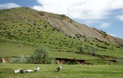 In montagne di Macin Fotografie Stock