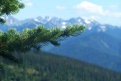 Montagne di nord-ovest pacifiche Immagini Stock Libere da Diritti
