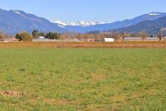 Montagne di Northshore della Columbia Britannica e delle colture miste fotografia stock