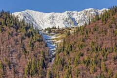 Montagne di Piatra Craiului, Romania Fotografie Stock