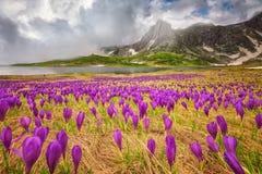 Montagne di Rila Fotografie Stock