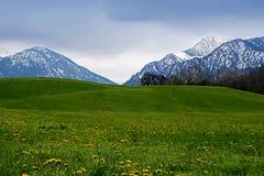 Montagne di Snowy dietro un prato verde con il dente di leone nel bava Fotografia Stock