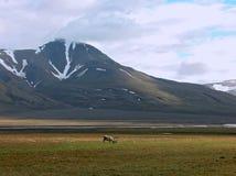 Montagne di Spitsbergen immagini stock libere da diritti