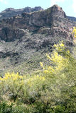 Montagne di superstizione in Arizona nella primavera Fotografie Stock Libere da Diritti
