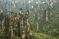 Montagne di Tianzi, Zhangjiajie Forest Park nazionale, Hunan Provin Immagine Stock