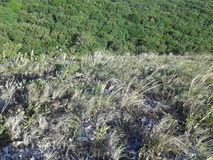 Montagne e colline Foreste miste della quercia e della foresta Bella natura Giovani adulti Cielo blu Vetro Immagini Stock