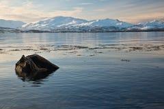 Montagne e fiordo in Norvegia Immagini Stock Libere da Diritti