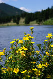 Montagne e fiori Fotografia Stock