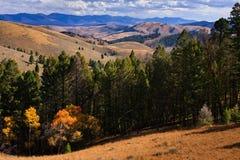 Montagne e foresta lungo il passaggio di Lemhi, Montana Immagini Stock