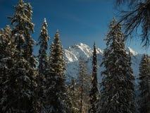 Montagne e foresta nell'inverno Immagini Stock Libere da Diritti