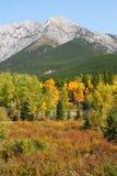 Montagne e foreste di autunno fotografie stock libere da diritti