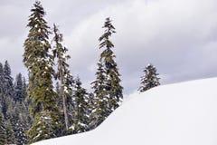Montagne e foreste nevicate Fotografie Stock Libere da Diritti