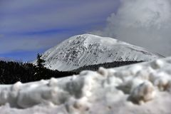 Montagne e foreste nevicate Fotografia Stock