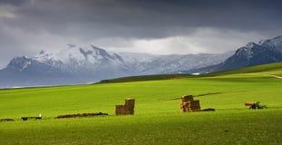 Montagne e pascolo dello Snowy Immagine Stock Libera da Diritti