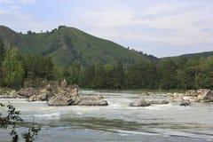 Montagne e rapide di Altai sul fiume Katun Fotografia Stock