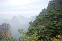 Montagne ed alberi Immagini Stock