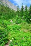 Montagne ed alta foresta alpina della conifera in Glacier National Park Immagini Stock Libere da Diritti