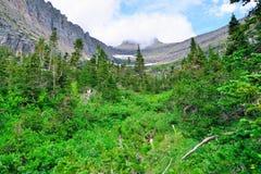 Montagne ed alta foresta alpina della conifera in Glacier National Park Fotografia Stock