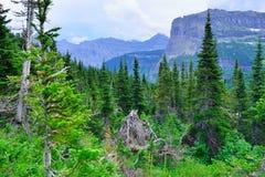 Montagne ed alta foresta alpina della conifera in Glacier National Park Immagini Stock