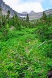 Montagne ed alta foresta alpina della conifera in Glacier National Park Fotografia Stock Libera da Diritti