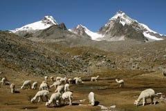 Montagne ed animali Fotografie Stock