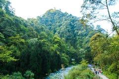 Montagne Emei - forêts Photos libres de droits