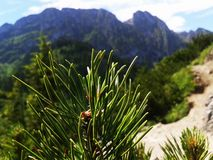 Montagne en Pologne Photos libres de droits