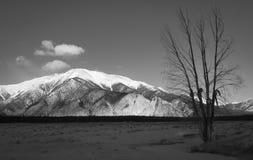Montagne et arbre scéniques Photographie stock libre de droits