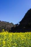 Montagne et fleur Photographie stock