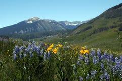Montagne et fleurs de ciel Image stock
