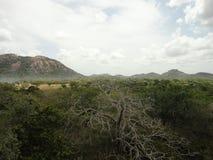 Montagne et jungle Image libre de droits