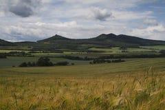 Montagne et pâturage verts larges images stock