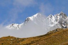 Montagne et troupeau neigeux majestueux de Deers rouge Photographie stock libre de droits