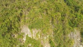 Montagne filippine delle colline Bella natura Volo e fucilazione con un fuco video d archivio