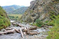 Montagne, fiume di Katun, un posto pittoresco del Altai Immagini Stock