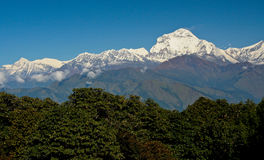 Montagne himalayane sotto il chiaro cielo, con gli alberi verdi come priorità alta Fotografie Stock Libere da Diritti
