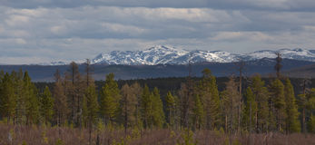 Montagne innevate con la foresta verde Fotografie Stock