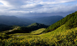 Montagne jaune de mauvaise herbe de tournesol mexicain Images stock