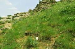 Montagne in Kadamzhay, Kirghizistan Fotografia Stock Libera da Diritti