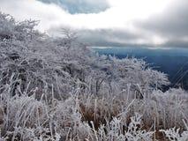 Montagne la Virginie de Whitetop image libre de droits