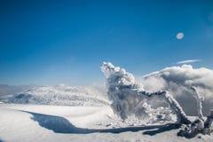 Montagne maestose del paesaggio misterioso di inverno con l'albero innevato Fotografia Stock Libera da Diritti