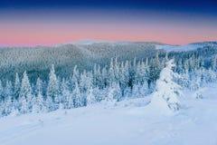Montagne maestose del paesaggio misterioso di inverno dentro Albero innevato magico In attesa della festa drammatico fotografia stock