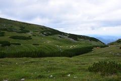 Montagne magnifique avec des vaches Image libre de droits