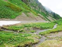 Montagne molto belle, montagne verdi Immagini Stock