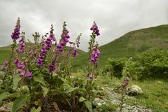 Montagne nel distretto Regno Unito del lago fotografia stock