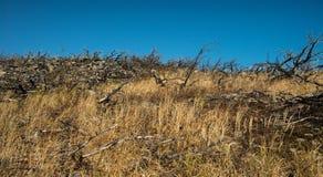 Montagne nell'estremo est della Russia Fotografia Stock